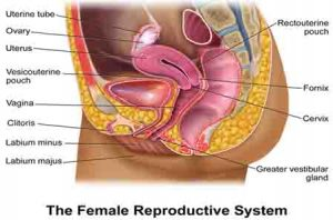 health of female reproductive organs